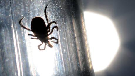 A tick studied at parasitology laboratory. © Sputnik / Konstantin Chalabov