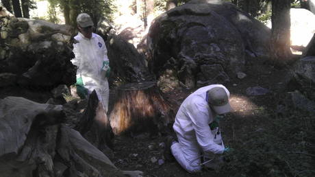 FILE PHOTO: Workers treat the ground to ward off fleas in California's Yosemite National Park
