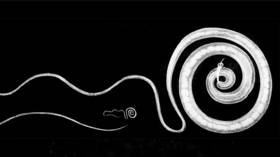 Boost in battle against drug-resistant parasites, as roundworms' ability to survive without oxygen revealed