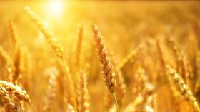 Russia on track to have one of its largest-ever grain harvests