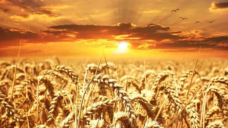 Russia projected to dominate global wheat exports for years to come