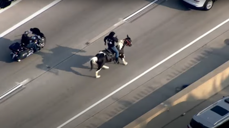 Chicago's 'Census Cowboy' charged with animal cruelty after 7-mile 'Kids Lives Matter' stunt on freeway leaves horse badly hurt