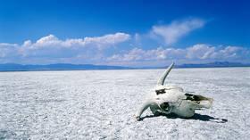 Is the world's wildlife in 'catastrophic decline'? Er, no.