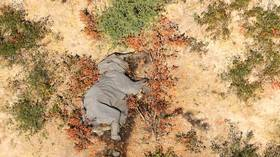 Mysterious mass elephant die-off across Africa finally explained, but not everyone's convinced by the answer