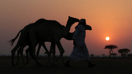 FILE PHOTO: A camel herder in Adhen Village, Ras al Khaimah, United Arab Emirates © Reuters / Christopher Pike