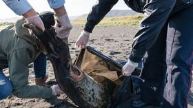 Pollution, algae or volcanos: Russian authorities name possible reasons for hordes of sea life washing up on Far Eastern beaches