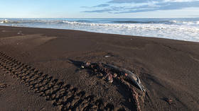 Criminal case opens after unexplained disaster kills almost all seabed-dwelling organisms on Far Eastern Russia's Pacific coast