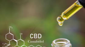 Cannabis to the rescue? New research suggests CBD oil may protect against Covid-19 lung damage