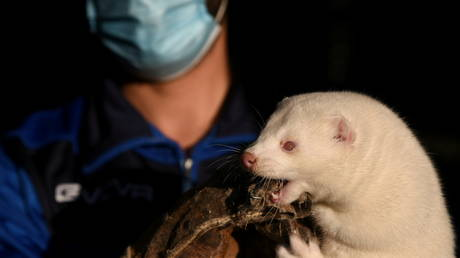 A mink held by its breeder (FILE PHOTO) ©  REUTERS/Alexandros Avramidis