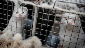 UK bans Danish ships, planes & trucks from entry, tightening restrictions over mutated mink coronavirus