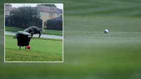 'This year isn't over yet': Terrified viewers say Florida is Jurassic Park as GIANT ALLIGATOR filmed prowling golf course (VIDEO)