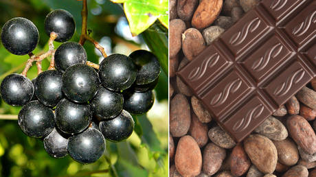 Compounds in muscadine grapes (L) and dark chocolate (R) can fight the SARS-CoV-2 virus. © Wikimedia Commons; Ralph Kerpa/ Global Look Press