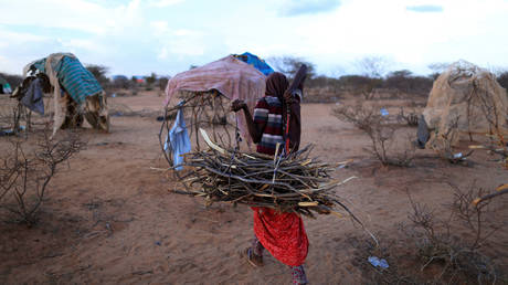 Woman carries firewood for cooking near her shelter in Dollow, Somalia