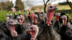 UK to cull 25,000 turkeys after NINTH bird flu outbreak this year