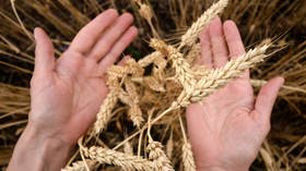 Moscow Exchange sows seeds of potential with launch of wheat futures contracts