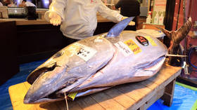Covid-19 pandemic leaves New Year's tuna auction in Tokyo with no jaw-dropping bidding war & costly purchases