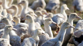 Outbreak of highly pathogenic H5N8 bird flu virus detected in Lithuanian poultry