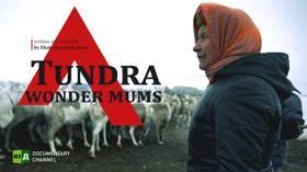 Tundra Wonder Mums