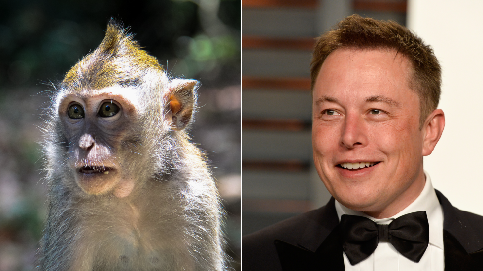 Elon Musk says his Neuralink startup has a brain-chipped MONKEY who plays video games