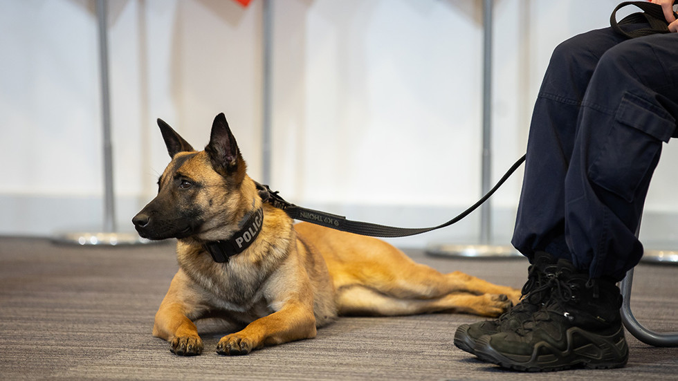 'It's our ethical duty': Poland seeks to introduce retirement benefits for police dogs & horses