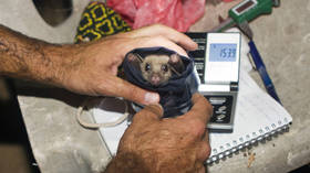 China bat caves need exploring for Covid-19 clues, says WHO, adding that virus circulation may predate identification in Wuhan