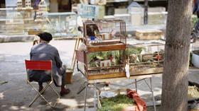 Paris to shut iconic bird market over animal welfare concerns