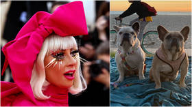 'Safely recovered': Lady Gaga's stolen bulldogs brought to LA police after pop star offers $500k reward with no strings attached