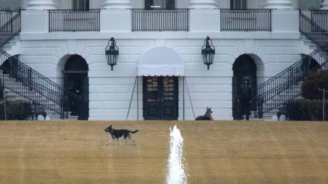 The Biden family dogs, Champ and Major, are shown on the South Lawn of the White House in February.