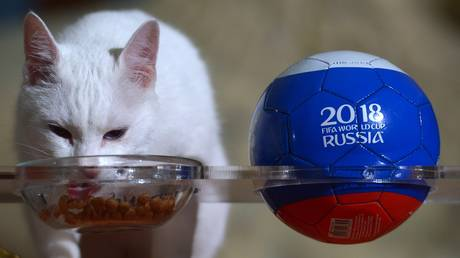 Hermitage cat Achilles © Sputnik / Alexander Galperin
