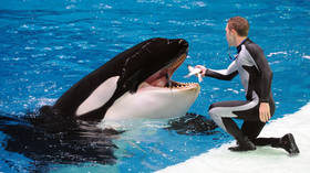 Russian MP moves to ban poaching of killer whales & dolphins in bid to shut vibrant but controversial marine mammal park industry