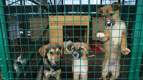 Stray dogs & cats to be killed 'humanely' in Russian animal shelters under controversial new measures proposed by ruling party MPs