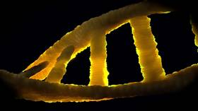 Researchers knock out multiple genes at once in CRISPR gene-editing game changer
