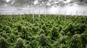 New York lawmakers reach agreement on legalization of recreational marijuana