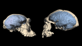 Modern brains evolved 1.7m years ago in Africa, study finds, after examining skulls of mankind's ancient ancestors