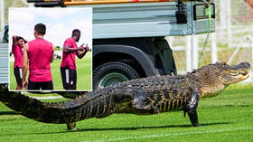 'You never see this in Toronto': Alligator joins football training session after MLS team is forced to relocate to Florida (VIDEO)