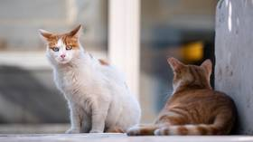South Korean police investigate stray cat deaths, as serial 'cat killer' blamed for poisoning 1,000+ animals over 13yrs