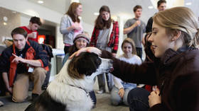 Barking mad: Therapy dogs & puppy rooms are turning university students into toddlers