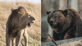 Can you beat a lion or a grizzly bear in a fight? YES, say a number of Americans in new survey