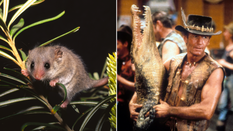 (L) Pygmy Possum. © Getty Images / TED MEAD; (R) Crocodile Dundee; Peter Faiman, 1986,© IMDB