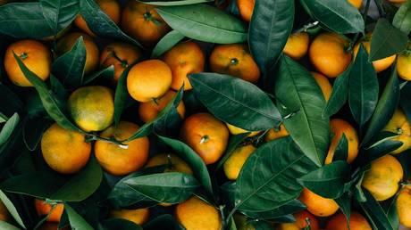 Saudi Arabia thwarts attempt to smuggle 4.5 million amphetamine pills inside crates of oranges