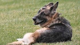 Media mourns passing of Joe Biden's dog Champ, write touching obits befitting protective instinct for their revered leader