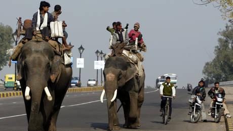 Elephants walk down a road in New Delhi