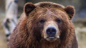 65-year-old camper pulled from tent and killed by grizzly bear in Montana attack