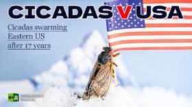 Cicadas v USA