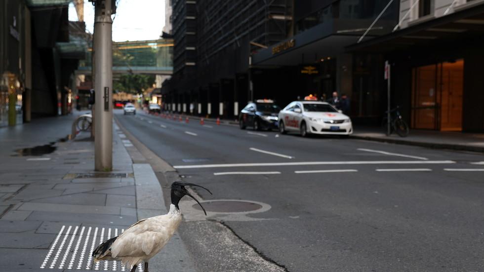 """Sydney fordert mehr Truppen, weil die Einschränkungen nach """"einem Covid-Fall"""" erweitert werden sollen"""