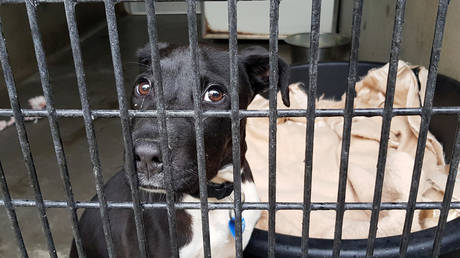 Citing Covid threat, Australian council SHOT SHELTER DOGS dead instead of allowing volunteers to collect them