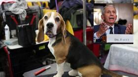 Fauci's institute funded 'deadly & unnecessary' experiments on DOGS, animal research watchdog says