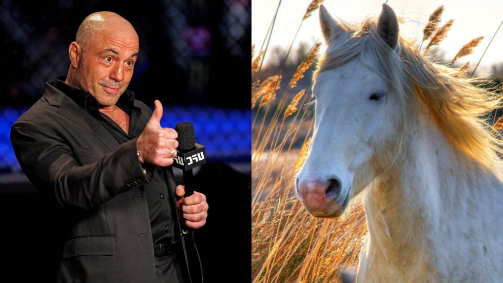 , 'Do I have to sue CNN?' Joe Rogan lashes out at liberal network for claiming he took 'horse dewormer' to fight Covid-19, The World Live Breaking News Coverage & Updates IN ENGLISH