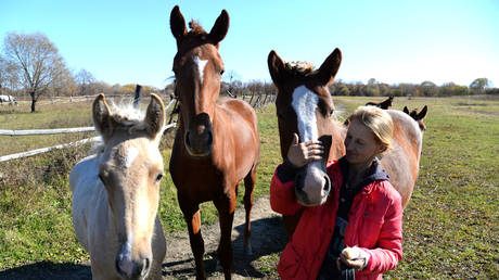 """The owner of the """"Far Eastern hectare"""" Ruslana breeds pedigree horses on her farm near the village of Magilevka, Khabarovsk Territory, Russia, October 10, 2017"""
