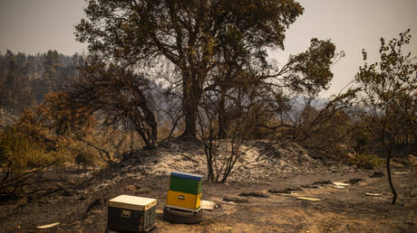 Two remaining beehives among burnt ones near the Village of Voutas on August 11, 2021 on the Greek island of Evia.